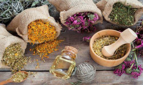6 bài thuốc nam chữa viêm đường tiết niệu cực hiệu quả ngay tại nhà